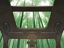Ford планирует использовать бамбук при производстве автомобилей - Ford