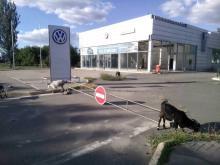 Автобизнес при ЛНР. Что стало с автосалоном Volkswagen