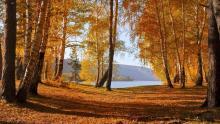 Осенний урожай акций. Какие авто выгодно покупать осенью?