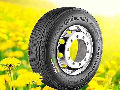 Continental может начать производить шины из одуванчиков уже через 5 лет
